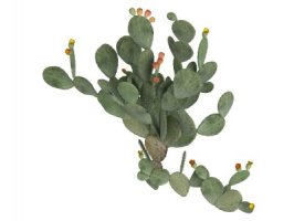 Nopál - Opuntia ficus indica